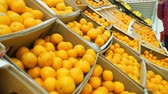 cytrusy : Young Woman Picking Up Tangerines for Purchase in a Grocery Store Supermarket. Housewife Shopping in a Supermarket in the Department of Fruit and Vegetables. Sale, Shopping, Consumerism Concept Wideo