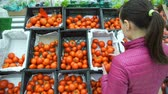 farmers market : Young Woman Choosing Tomatoes in a Grocery Store Supermarket. Housewife Shopping in a Supermarket in the Department of Fruit and Vegetables. Slow Motion. Sale, Shopping, Consumerism and People Concept