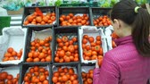 kararlar : Young Woman Buying Tomatoes in a Grocery Store Supermarket. Housewife Shopping in a Supermarket in the Department of Fruit and Vegetables. Sale, Shopping, Consumerism and People Concept Stok Video