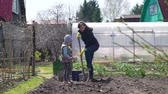 Young Woman Digging the Soil with Shovel and her Daughter Throwing Potato Seeds into Small Holes in the Ground. They Planting Potatoes in the Organic Vegetable Garden. Slow Motion.