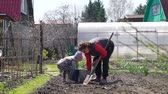 Senior Woman Digging the Soil with Shovel and her Granddaughter Throwing Potato Seeds into Small Holes in the Ground.Family Planting Potatoes in Spring in the Vegetable Garden.