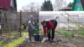 Young Girl and her Grandmother Planting Potatoes in Spring in Slow Motion. Senior Woman Digging the Soil with Shovel and her Granddaughter Throwing Potato Seeds into Small Holes in the Ground. Wideo