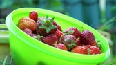 morango : Close Up of Putting Freshly Picked Strawberries into the Green Bowl in Slow Motion. Concept of Growing Natural Clean and Organic Food