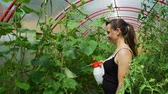 insecticida : Smiling Woman Farmer Spraying Pesticide on Leaf of Tomato Plants. Vegetable Cultivation. Farming, Gardening, Agriculture and People Concept