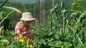 morango : Little Girl in Straw Hat Picking Strawberries in the Garden in Slow Motion. Farming, Gardening, Agriculture and People Concept
