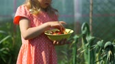 morango : Little Girl Looking at Freshly Picked Strawberry and Putting it into the Bowl. Slow Motion. Concept of Growing Natural Clean and Organic Food Vídeos