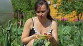 morango : Female Gardener Putting Freshly Picked Strawberries into the Bowl in Sunny Summer Day. Concept of Growing Natural Clean and Organic Food