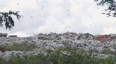 fogyasztás : Working Day at the Landfill Site of Domestic Waste and Garbage. Concept of Environmental Pollution and Waste Recycling Stock mozgókép