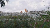 fogyasztás : Novosibirsk, Russian Federation - September 7th, 2019: Dump Truck Unloading Garbage over a Landfill Site in Summer Day Stock mozgókép