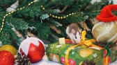 rat : Cute Domestic Rat Near Walking near Christmas Tree. Gifts, Toys, Garlands near Christmas Tree Branches. The Symbol of the New Year 2020 in the Chinese Calendar. New Year and Christmas Concept