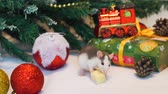 マウス : Cute Domestic Rat Tasting Piece of Cheese Near Christmas Tree Decorations. The Symbol of the New Year 2020 in the Chinese Calendar. New Year and Christmas Concept 動画素材
