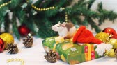 ratti : Little Rat Eating Piece of Cheese near Christmas Tree while Sitting on the Present Box. The Symbol of the New Year 2020 in the Chinese Calendar. New Year and Christmas Concept