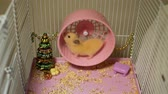 chomik : Cute Syrian Hamster Running on Wheel in the Cage in Slow Motion. Toy Christmas Tree and Decorations are Around It. Working Hard on Holidays Wideo