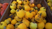 販売のための : Young Woman Buying Fresh Pumpkin at the Local Farmers Market. Lots of Yellow Pumpkins are in Wooden Boxes. Slow Motion. Natural Organic and Vegan Food Shopping Concept