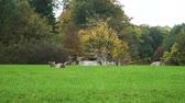 összhang : Herd of Roe Deers Resting on the Grass over the Autumn Forest Background. Animals Life in Nature, Wildlife Concept