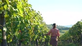 Back View of Young Woman Walking at Family Winery Between Rows of Green Vineyards with Grape in Tuscany. Inspecting Plantation of Red Grape in Italy at Sunset. Agritourism, Ecotourism