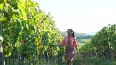 Young Woman Walking at Family Winery Between Rows of Green Vineyards with Grape in Tuscany. Inspecting Plantation of Red Grape in Italy at Sunset. Slow Motion.