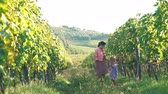 Young Beautiful Woman with her Daughter Walking through the Rows of Tuscan Vineyards. Little Girl Tasting Fresh Grape from the Bunch. Italian Province and Hills. Slow Motion.