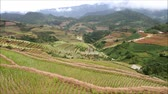 field : Rice terraces in Mu Cang Chai  in Vietnam