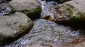 vektor : Slow motion of water flowing in Doi Suthep Pui national park, Thailand.