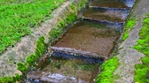 grondaia : 4K video of water flowing in the step gutter, Thailand. Filmati Stock