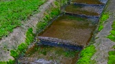 storm drain : Slow motion video of water flowing in the step gutter, Thailand. Stock Footage
