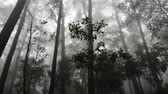 4K time lapse video of forest with fog flowing, Thailand. Stock Footage