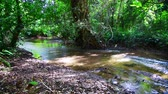 4K video of small canal in Tham Luang - Khun Nam Nang Non forest park, Thailand.