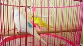 pták : white and yellow canary bird in cage