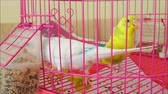 white and yellow canary bird in cage.