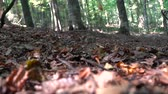 naturale : yellow leaves falling on the ground in slow motion Stock Footage