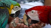 gaga : parrots eating seeds at hand
