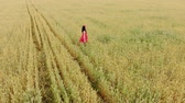 dik dik bakmak : Beautiful girl in red retro dress running in golden field. Freedom concept. Happy woman outdoors. Harvest, agriculture concept. Aerial flight over wheat field