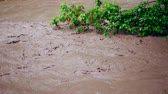 ドレイン : Flood after rain or hurricane. Dirty brown strong water flowing gushing into river. Close up footage 動画素材