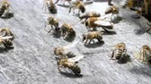 koninginnedag : Insects are at entrance to hive.Swarm of bees circle around hive.Apiary,beekeeping,collective work concept bee agriculture.Macro.
