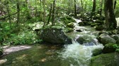dumanlı : Creek in forest - Great Smoky Mountains NP, Tennessee Stok Video