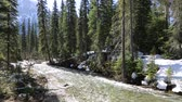 The creek in the forest, Yoho NP, Canada Stock Footage