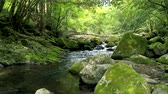 musgoso : landscape of clear stream Stock Footage