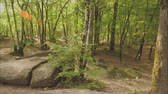 ecclesiastic : View of huge stones in the forest Stock Footage