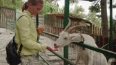 cabra : Young caucasian blonde feeding white goat with hands behind fence