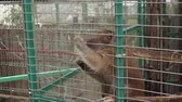 imprisoned : Monkey in cage of zoo
