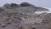 canárias : Waves of stormy sea are breaking on rocky shore. Vídeos