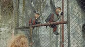 postura : Two monkeys with white beard sit on fence in zoo and eat corn