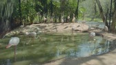 впечатляющий : View of plenty flamingos in zoo in Pattaya