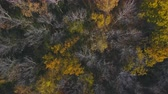 Flying over the beautiful sunny autumn forest trees. Aerial view.