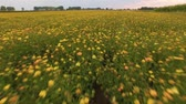 amarelo : Colorful summer meadow 4k aerial video Stock Footage