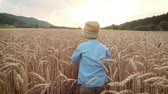 agriculture : Little boy on the wheat field - slow motion Stock Footage