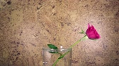fragility : the red rose slowly falls in a vase and bouncing, slow motion Stock Footage