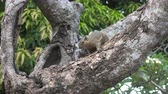 mouse : The common treeshrew eats nuts sitting on a tree