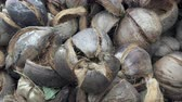 шелуха : The shell of coconuts prepared for use in the form of fuel for cooking